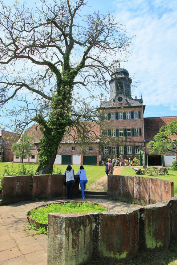 Schloss_Wolfsgarten_Rhododendrenblüte_002