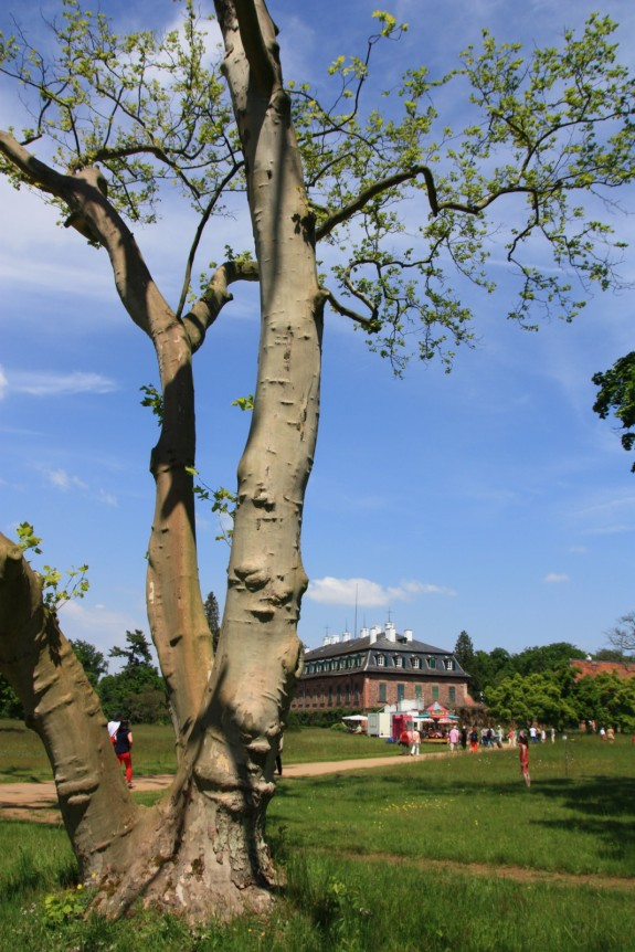 Schloss_Wolfsgarten_Rhododendrenblüte_011