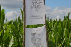 Kunst im Mais